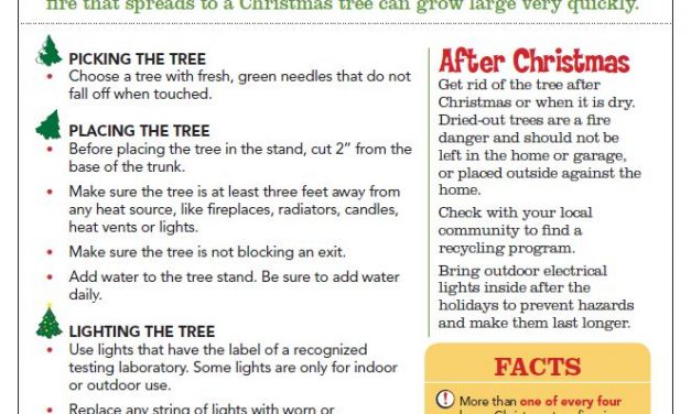 Christmas Tree Safety